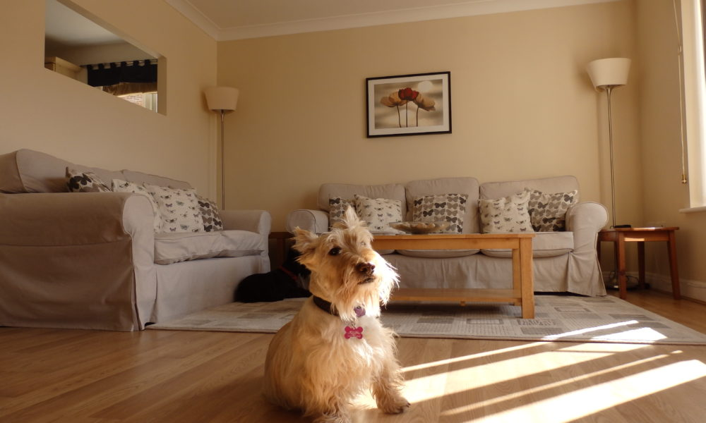 Pet friendly holiday let Whitby, Whitby holiday apartment