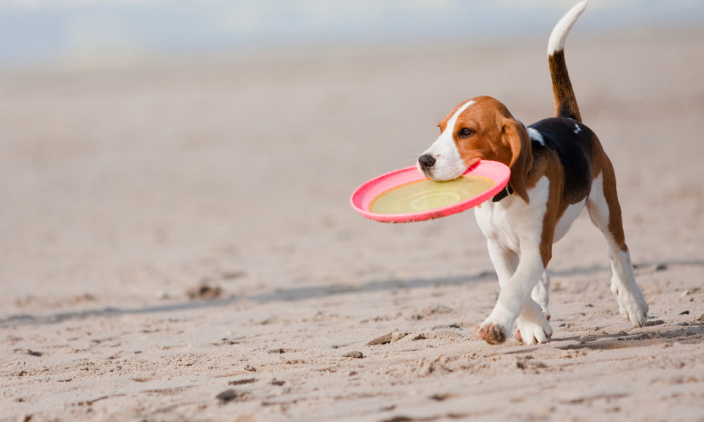 dog friendly beaches in Whitby, dog friendly holiday cottages in Whitby