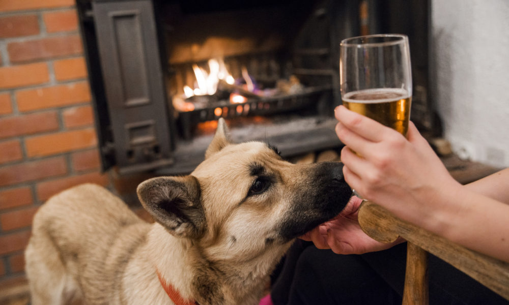 Dog friendly pubs in and around Whitby, pet friendly properties in Whitby