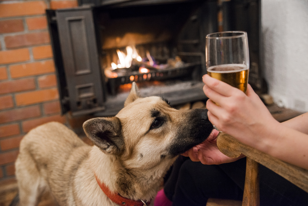 Dog-friendly pubs in and around Whitby - Shoreline Cottages