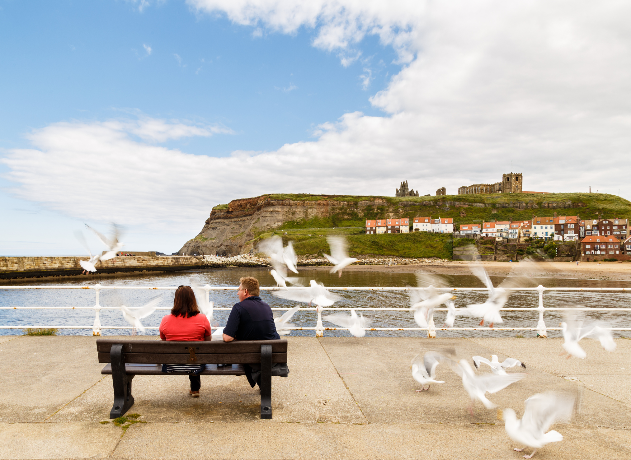 couple sat on bench as flock of seagulls takes flight
