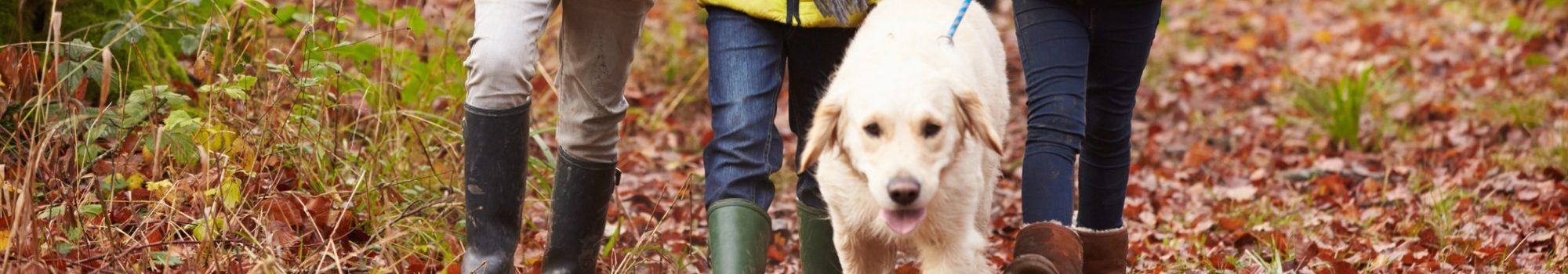 Dog friendly winter walk in Whitby